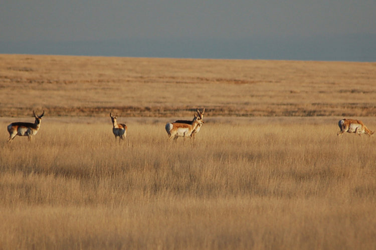Southwest Kansas Grasslands